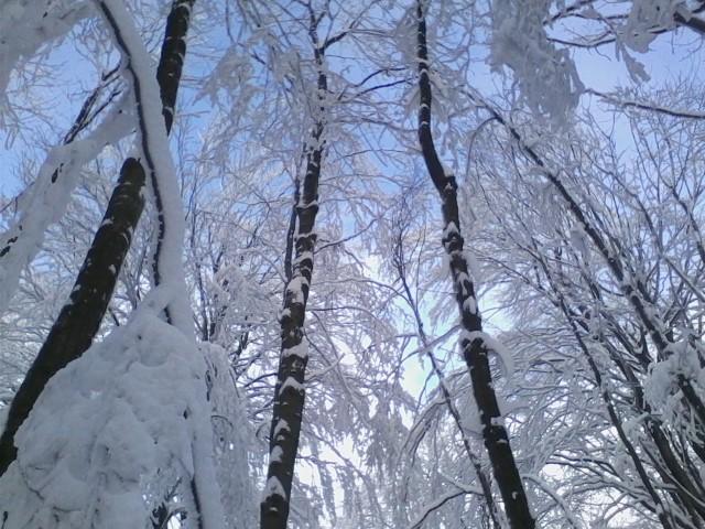 Ilyen az igazi Téli Mátra: behavazott erdő Kékestető közelében
